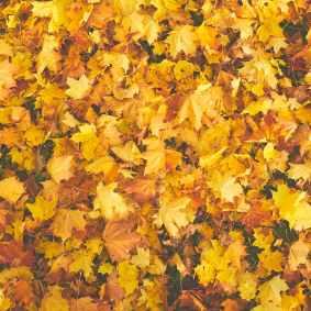 Photo by Kadri Vosumae on Pexels.com